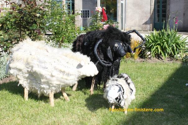 Mouton noir d'Ouessant