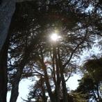 arbre_jardin-ile_de_batz