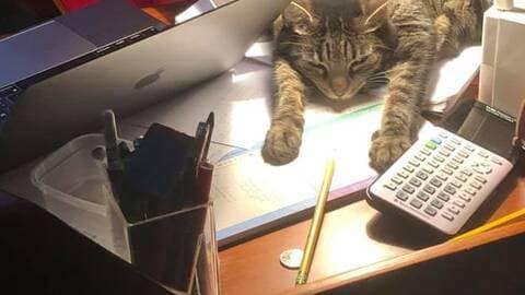 Chat confiné